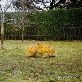 Filet canard, L. 16x1.30 m, 5 piquets
