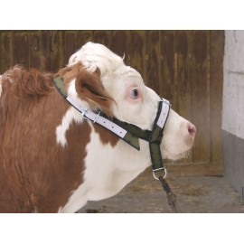 Halfter für Rinder und Jungbullen