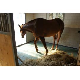 Gummimatte Equimat für Pferde    177 x 117 x 2,8 cm
