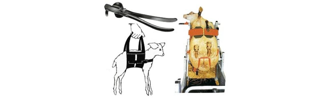 Moutons, chèvres